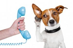 animal-communication-2
