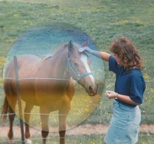 jill-horse